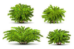 Shrubbery, 3d isometric bushes  on white vector set. Green shrubbery illustration Royalty Free Stock Images