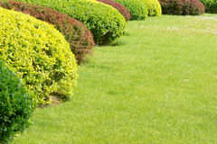 Shrubbery and grassplot Stock Images