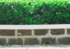 Shrubbery Royalty Free Stock Images