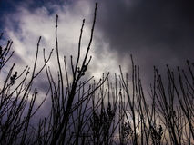 Shrubbery  in storm time Royalty Free Stock Photography