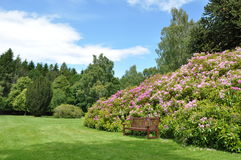 Shrubby garden stock photo