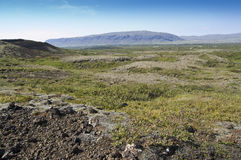 Shrubland in Iceland Royalty Free Stock Image