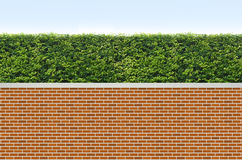 Shrubs и загородка кирпича Стоковые Изображения