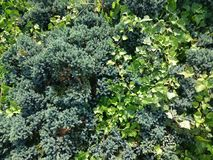 shrubs Стоковая Фотография