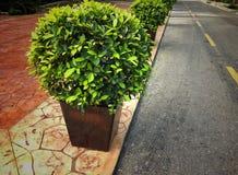shrubs Стоковые Фотографии RF