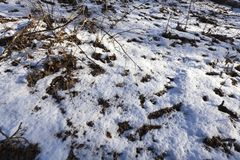 Forest in the winter season Royalty Free Stock Images