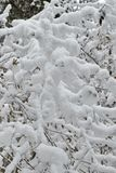 Shrubs are beautifully snow-covered with snow stock photos