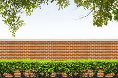 Shrubs and brick fence Royalty Free Stock Image