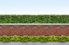 Shrubs and brick fence Stock Images