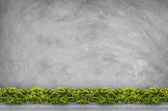 Shrubs with concrete background Stock Image