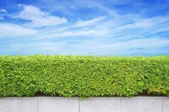 Shrubs fence on blue sky Stock Photography