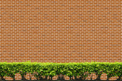 Shrubs fence on brick wall Stock Images