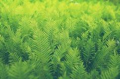 Shrubs fern Background Stock Image