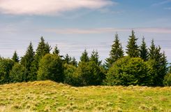 Shrubs and fir trees on the edge of grassy meadow. Shrubs and fir trees on the edge of a grassy meadow. beautiful nature scenery in fine weather Royalty Free Stock Photo