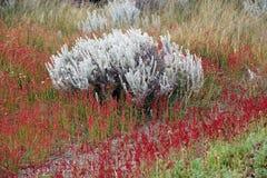 Shrubs at Laguna Nimez, a wildlife reserve at El Calafate in Patagonia, Argentina. Shrubs and flowers at Laguna Nimez, a wildlife reserve at El Calafate in royalty free stock photo