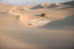Shrubs In Sand Dunes Royalty Free Stock Photography