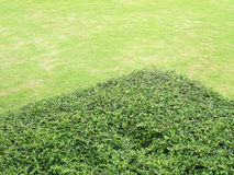 Shrubs on the lawn Stock Images