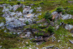 Shrubs and lychens on a rocky substrata in the Swiss Alps Royalty Free Stock Photography