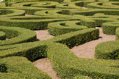 Shrubs Maze. Landscaping of Shrubs to Look like a Patterned Maze Stock Photos