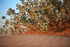 Shrubs in the sandy desert. Stock Photos