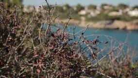 Shrubs on the slopes of the rocks. Spanish beaches in Cala Mendia. Mallorca