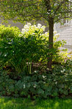 Shrubs and Tree in Front Yard Royalty Free Stock Images