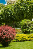 Shrubs and trees Stock Photography