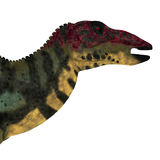 Shuangmiaosaurus Dinosaur Head Royalty Free Stock Photography