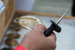 Shucked Oyster Royalty Free Stock Image
