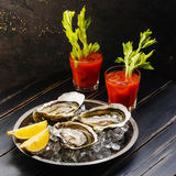 Shucked Oysters and Bloody Mary cocktail Stock Photography