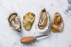 Shucked Oysters and oyster knife Stock Photo