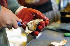Shucking An Oyster Royalty Free Stock Photography