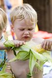Shucking Corn. Young boy shucks corn in the summer stock photography
