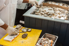 Shucking and opened oysters. Shucked and opened oysters on ice royalty free stock photos