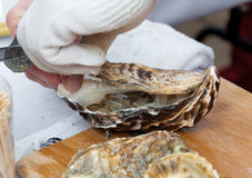 Shucking an oyster Stock Images