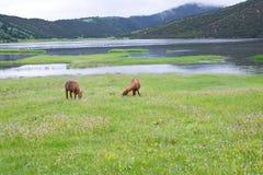 Shudu Lake scenery Stock Photography