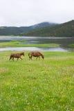 Shudu Lake scenery Stock Photos