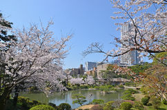 Shukkeien Garden in Central Hiroshima Royalty Free Stock Image