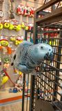 Shula the parrot royalty free stock photos