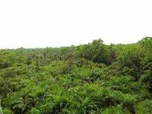 Shundorban自然美丽的孟加拉国 库存照片