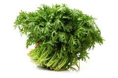 Shungiku också som är bekant som tongen hao eller ätlig chrysanthemum fotografering för bildbyråer