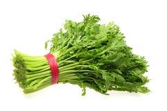 Shungiku också som är bekant som tongen hao eller ätlig chrysanthemum royaltyfri bild