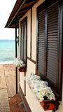 Shutters at the sea. With daisies royalty free stock image
