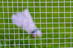 Shuttlecock на зеленой траве Стоковые Изображения