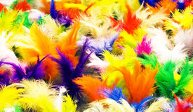 Shuttlecock Feathers Stock Photos