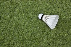 Shuttlecock on green grass. Badminton Stock Photography