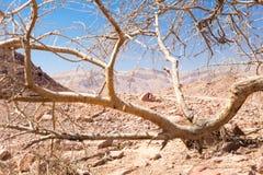 Shvil Izrael pustyni podróży śladu ocechowania znak Zdjęcie Royalty Free