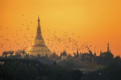 Shwedagon pagoda. In Yangon city with sunset and bird, Myanmar royalty free stock image