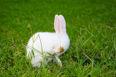 Shy baby rabbit Royalty Free Stock Photo