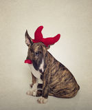 Shy Bull Terrier sitting funny in his devil outfit Stock Photo